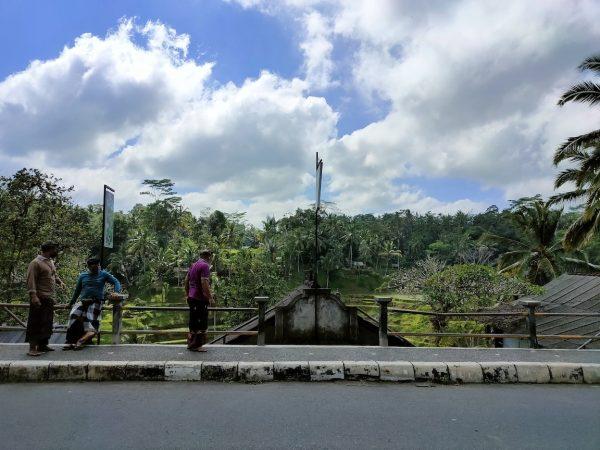 ubud-riceterrace13